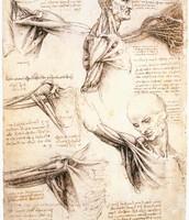 da Vinci Study of anatomy