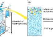 Electrophoresis הרצה באלקטרופורזה