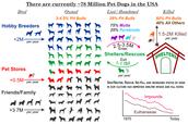 Statistics on dogs