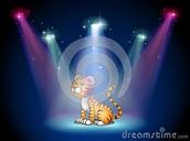 Tiger Spotlight