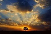 Suferinta provine din rezistenta ce opunem Vietii ! Daca am putea in fiecare moment sa acceptam Viata asa cum este ( in felul in care o experimentam) am trai in liniste, siguranta si iubire.