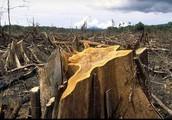 ניצול יתר של משאבי טבע