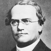 Gregor Johann Mendal
