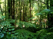 Biome # 1: Temperate Rainforest