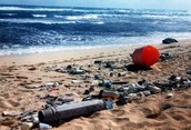 People Should Be Find $500 For Littering On The Beach, Because The Trash Could End Up In The Ocean And Kill Fish And Hurt The Environment.