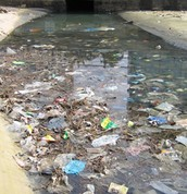 Polluted River in Capetown,SA