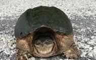 You LOVE turtles