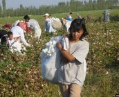 Young men and woman and even children are forced by debt to work in cotton fields like this