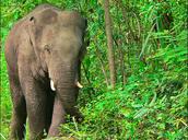 Elephants habitats