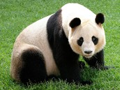 Fun Fact: The Awesome Pandas