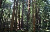 stuk in forest