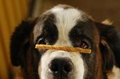 Finn riktig hundeskole