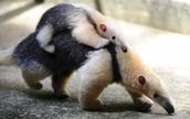 Jardim Zoo Animals