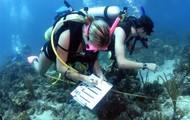 Marine biologist studying