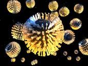 Rotaviruses