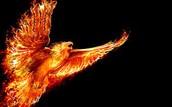 A firebird (Phoenix Association)