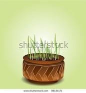 Control Soil
