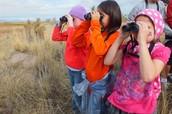 Birding at GSL