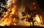 Two Main Issues Caused by Wild Fires