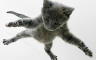 Cat's Jumping!