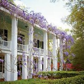 Wisteria vines on house