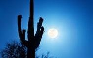 the blue light cactus