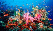 what live coral reefs look like