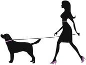 Individual Dog Walking