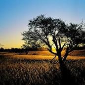 Beautiful Kalahari