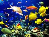 Long Island Coral Reef