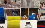 Large Cat Facts