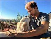 Mark's Dog