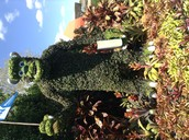 Cool Sully Topiary