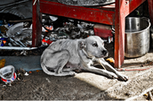Now when you see a neglected or abused animal, you can take action. Don't hesitate. Your call could save a life