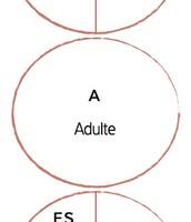 Parent -Adult-Enfant
