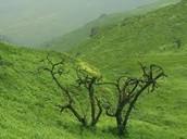 Lomas de Lachay
