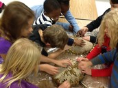 Butterfly Garden-Harvesting Sunflower Seeds