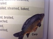 Carp Can Be fried