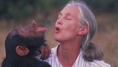 Jane teaches monkey to howel