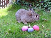 Easter Is  Just Around The Corner