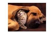 Family Friendly, Pet Friendly