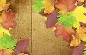 Fall Courses