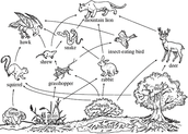 Food Chain In The Mountain Ecosystem