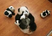 Panda Play