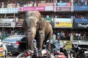 El elephante el el ciudad