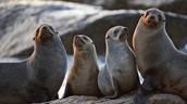 Save Australian Marine Animals