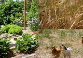 What Is Permaculture? Five Ideas That may Help save Time and expense