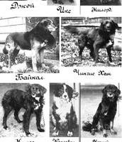 Pavlov's Orginal Dogs