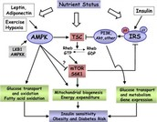 Cell signaling pathway involved