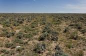 Landscape of the Oregon Trail